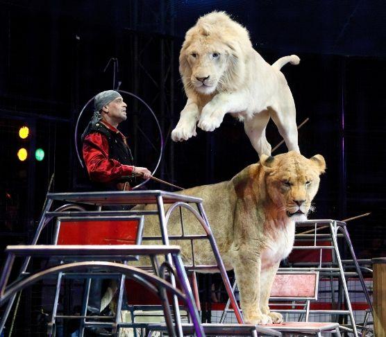 サーカス ライオン